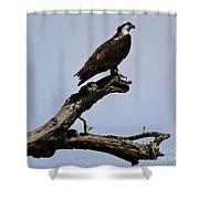 Double Perches Shower Curtain