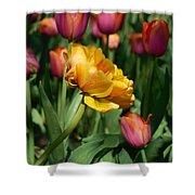 Double Petal Yellow Tulip Shower Curtain