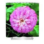 Double Pink Zinnia Shower Curtain