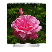 Double Rose Shower Curtain