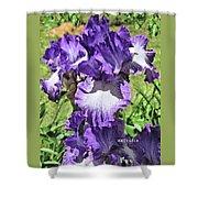 Double Ruffled Purple Iris Shower Curtain