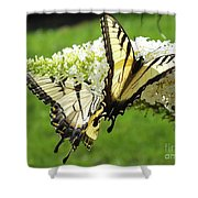 Double The Pleasure - Eastern Tiger Swallowtails Shower Curtain