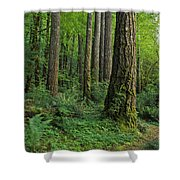 Douglas-fir Shower Curtain