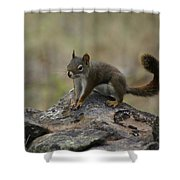 Douglas' Squirrel On The Rocks Shower Curtain