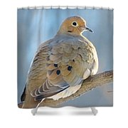 Dove In Evening Light Shower Curtain by Lori Frisch
