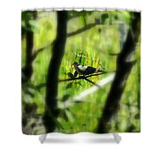 Dove In The Everglades  Shower Curtain