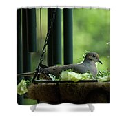 Dove Nesting, Balcony Garden, Hunter Hill, Hagerstown, Maryland, Shower Curtain