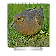 Dove With Hdr Shower Curtain