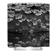 Dovedale Shower Curtain