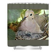 Doves In Planter Shower Curtain