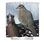 Doves New Pal Shower Curtain