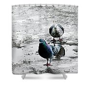 Doves On The Street Shower Curtain