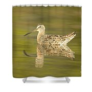 Dowitcher Reflection I Shower Curtain