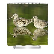 Dowitcher Reflections Shower Curtain