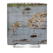 Dowitchers Shower Curtain