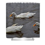 Down Covered Cruisers Shower Curtain
