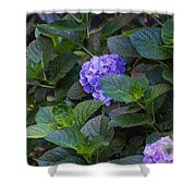 Down The Hill Shower Curtain