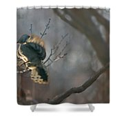 Downey Woodpecker Shower Curtain
