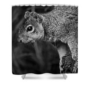 Downward Facing Squirrel Shower Curtain
