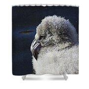 Downy - Baby Flamingo Shower Curtain