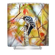 Downy Woodpecker In Autumn Forest Shower Curtain