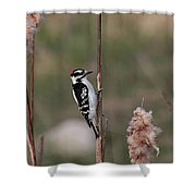 Downy Woodpecker On Cattails Shower Curtain