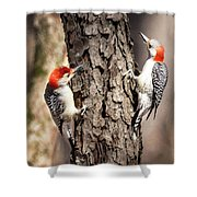 Downy Woodpeckers Shower Curtain