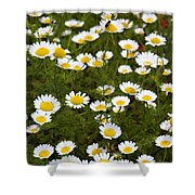 Dozens Of Daisies Shower Curtain