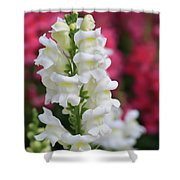 Dragon Flowers Shower Curtain by Tracy Hall