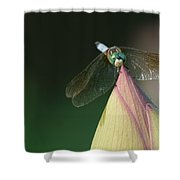 Dragon Fly Lotus Shower Curtain