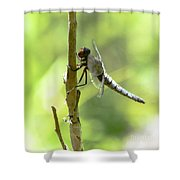 Dragonfly Slow Dance Shower Curtain