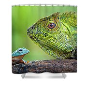 Dragon Forest And Frog Shower Curtain