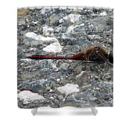 Dragon On The Pavement Shower Curtain
