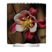 That Red Flower Thing  Shower Curtain