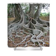 Dragonfeet Shower Curtain
