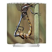 Dragonflies Mating Shower Curtain