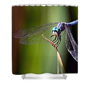 Dragonfly 0367 Shower Curtain