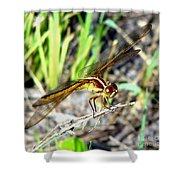 Dragonfly 1 Shower Curtain