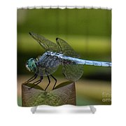 Dragonfly 14 Shower Curtain