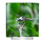 Dragonfly 15 Shower Curtain
