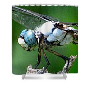 Dragonfly 16 Shower Curtain