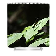 Dragonfly 3 Shower Curtain