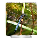 Dragonfly 6 Shower Curtain