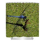 Dragonfly 73 Shower Curtain