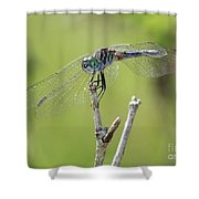 Dragonfly Against Green Backdrop Shower Curtain