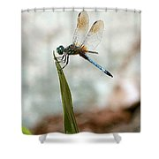 Dragonfly At Cypress Gardens Shower Curtain