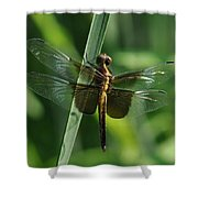 Dragonfly At Rest Shower Curtain