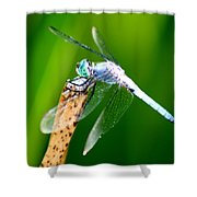 Dragonfly Blue Shower Curtain