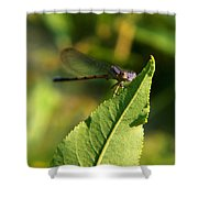 Dragonfly Called Funny Face Shower Curtain