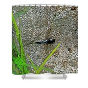 Dragonfly A Shower Curtain